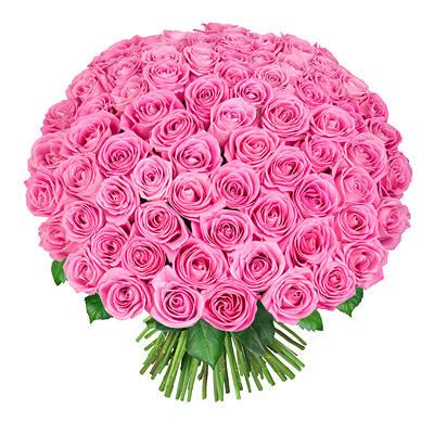 75 rozovie rozi