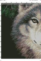 Два волка на черном(3)