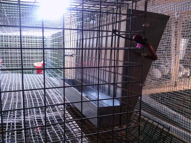 Бункерные кормушки для цыплят своими руками фото оригинальные идеи