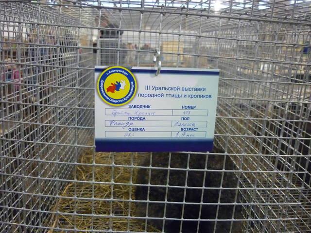 III Уральская выставка породных птиц и кроликов. г. Екатеринбург 01-02 декабря 2012 года - Страница 2 1322017_m