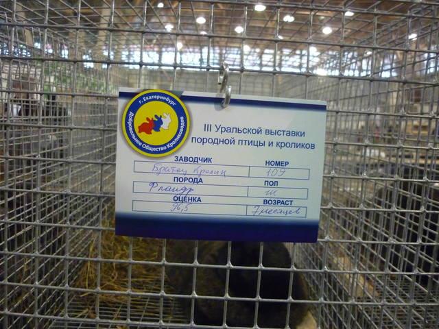 III Уральская выставка породных птиц и кроликов. г. Екатеринбург 01-02 декабря 2012 года - Страница 2 1322053_m