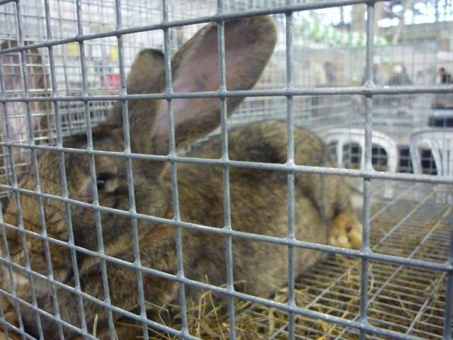 III Уральская выставка породных птиц и кроликов. г. Екатеринбург 01-02 декабря 2012 года - Страница 2 1322146_m