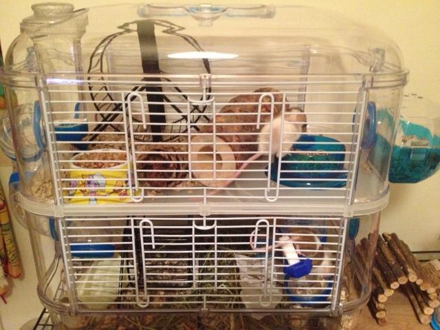 Клетка для мышки своими руками