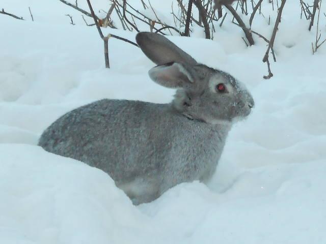 у кого какие кролики - Страница 2 1516865_m