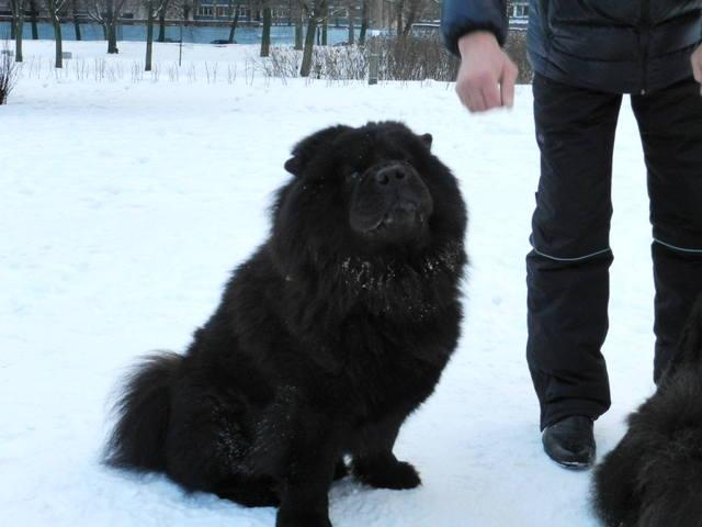 http://images.vfl.ru/ii/1357636859/42edb79e/1526520_m.jpg