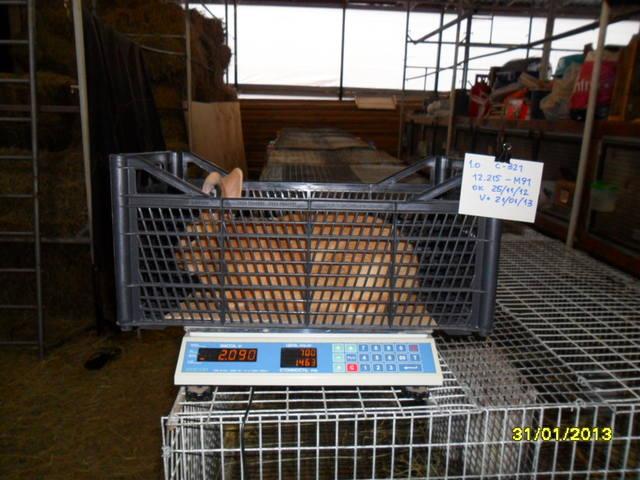 Кролики породы Бургундский - Страница 5 1664521_m