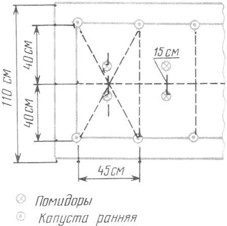 Схема посадки капусты при капельном орошении