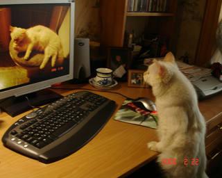 Отбираю свои фотки для citycat.ru.2