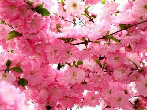 pink 25