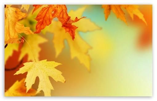 yellow autumn leaves macro-t2