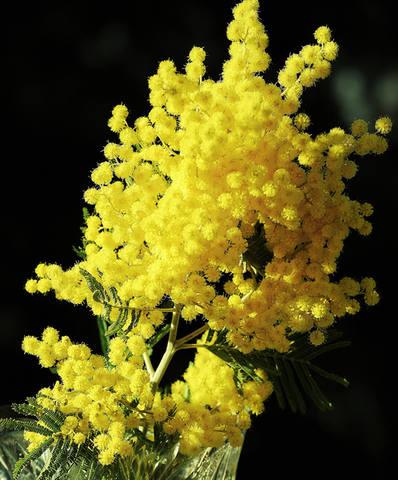 Цветочков - желтых аромат