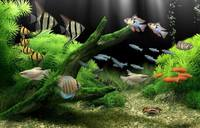 Dream Aquarium 1.2592 Screensaver + Rus