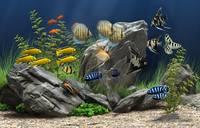 Dream Aquarium 1.2592 Screensaver + Rus