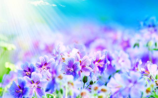 Summer Flowers wallpapers and stock photos.