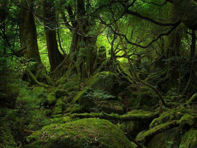 greenforestbycrazmo4sho