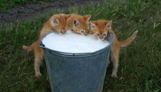 ведро молока