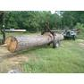 loading and moving big logs 5