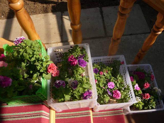 Во что можно сажать цветы в саду 341