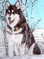 http://images.vfl.ru/ii/1368859007/be769c56/2359777_s.jpg