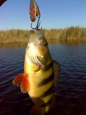 Рыбалка - Страница 10 2402771_m