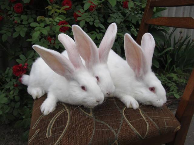 Крольчата. - Страница 5 2470783_m