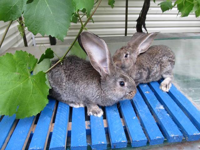 Крольчата. - Страница 6 2471050_m
