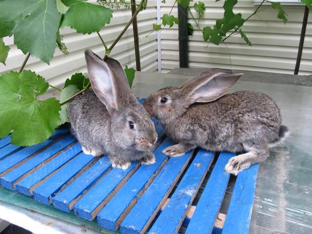 Крольчата. - Страница 6 2471058_m