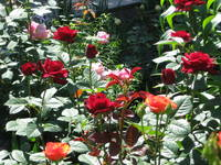 http://images.vfl.ru/ii/1370596145/fe234845/2480415_s.jpg