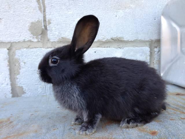 Крольчата. - Страница 6 2551968_m