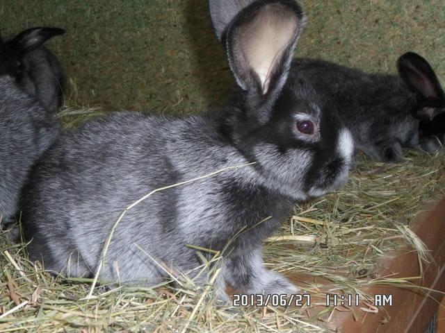 Крольчата. - Страница 6 2596441_m