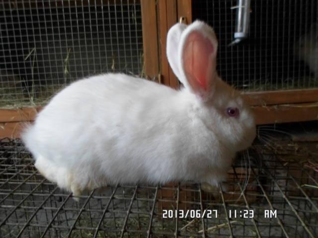 Крольчата. - Страница 6 2596451_m