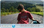 http//images.vfl.ru/ii/1372685355/97fa433a/2623990.jpg