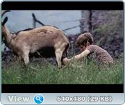 http//images.vfl.ru/ii/1372854164/96164e40/2635801.jpg