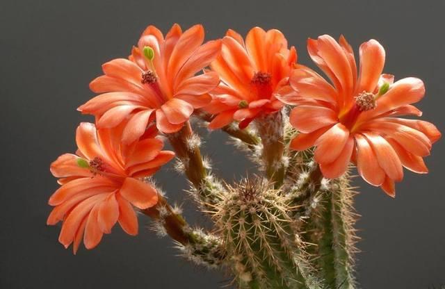 Мир цветов, растений, деревьев - Page 2 2665908_m