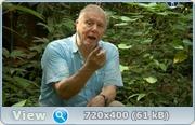 BBC. ���������. 60 ��� � ����� �������� / BBC. Attenborough: 60 Years in the Wild (2012) SATRip