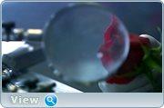 Розы для Эльзы (2009) HDTVRip