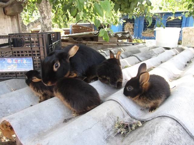 Черно-огненный кролик. - Страница 2 2699723_m