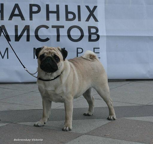 http://images.vfl.ru/ii/1374476101/c9685877/2743201_m.jpg