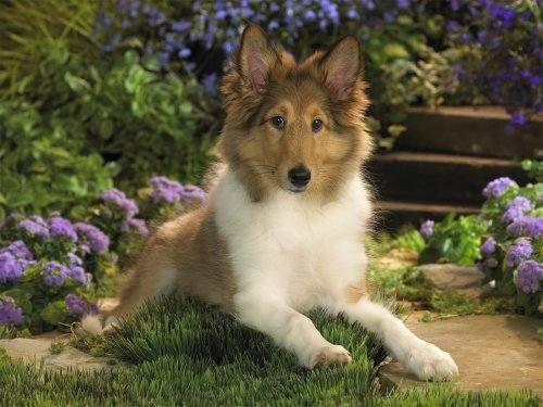 Красивые и добрые собаки 2777812_m