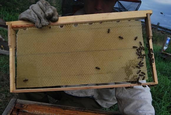 Пчеловоды есть? Всё о пчеловодстве - Страница 3 2785164_m