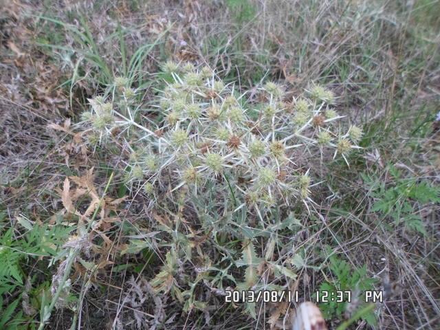 Любую ли траву можно давать кроликам 2870262_m