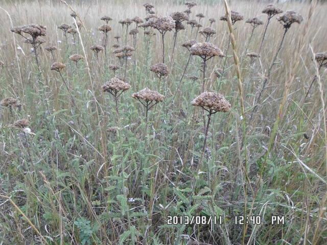 Любую ли траву можно давать кроликам 2870265_m