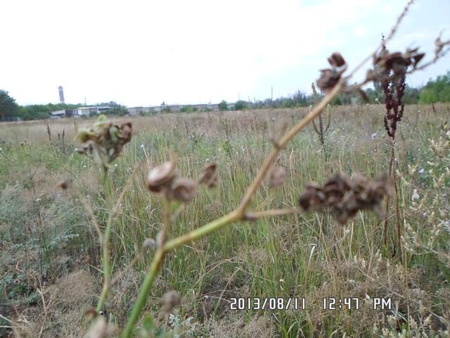 Любую ли траву можно давать кроликам 2870317_m