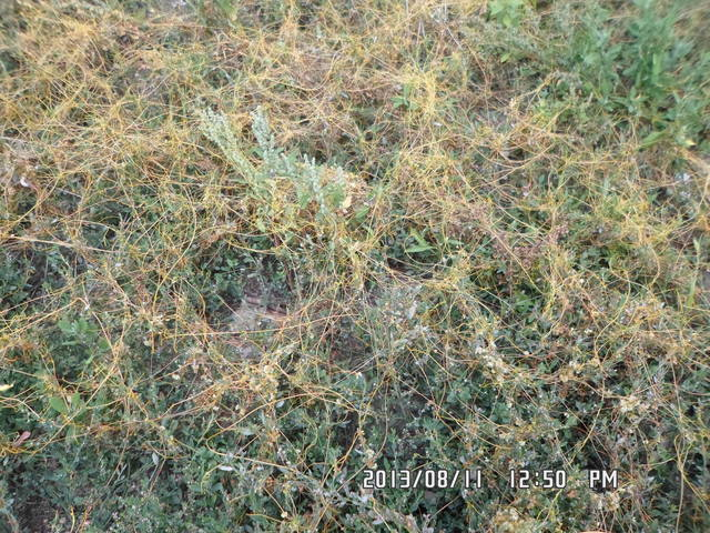 Любую ли траву можно давать кроликам 2870344_m