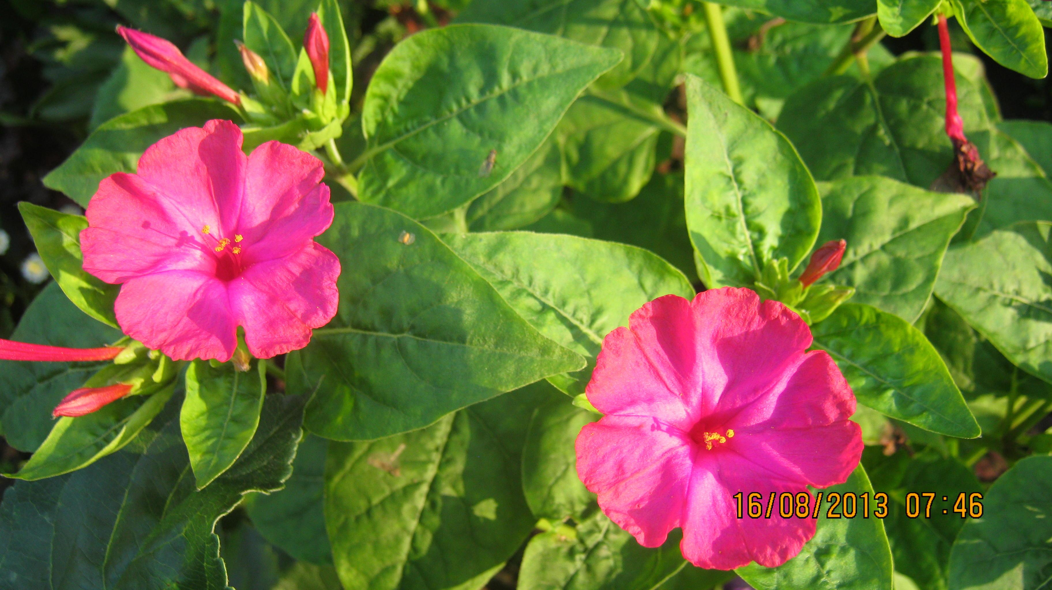 Цветок цветущий ночью фото