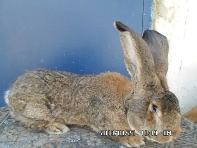 Оптимальный репродуктивный возраст кроликов 2978231_m