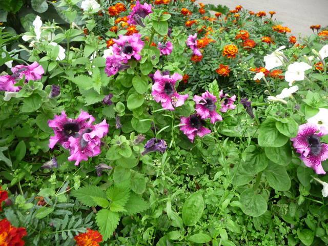 Цветы в саду которые любят тень фото