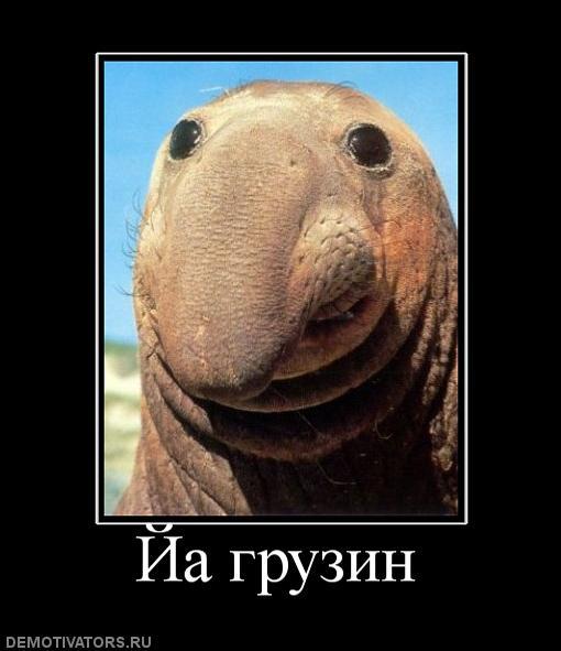 http://images.vfl.ru/ii/1378319935/24cd9cf2/3035465.jpg
