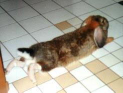 Пододерматит кроликов - Страница 2 3179984_m