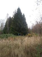 http://images.vfl.ru/ii/1380393763/54f66e63/3191537_s.jpg